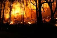 Forest Fires Handled by Emergency Management